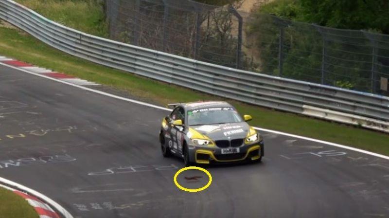 К гонщику за рулем BMW M235i на Нюрбургринге пришла белочка!